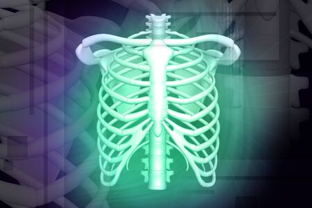 rib: Digital illustration of human rib in color background