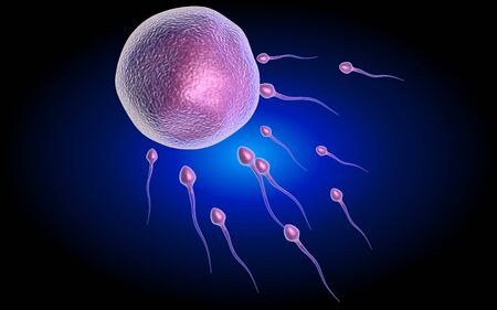human sperm: human sperm cells trying to reach an human ovum