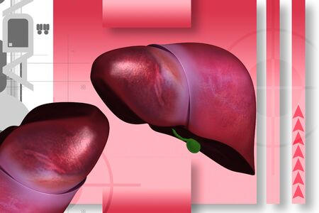 Highly quality of rendering  liver in color background  photo