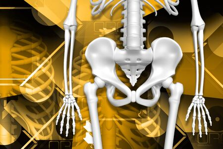 pelvis: Digital illustration of human pelvis and skeleton in color background