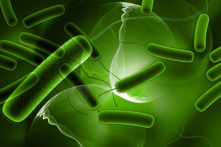 3d rendered close up of coli bacteria in digital background   photo
