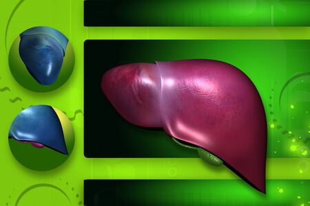 Highly quality of rendering  liver in color background Stock Photo - 7297917