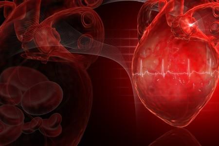 Human heart Stock Photo - 8057710