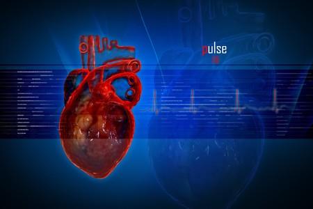 coraz�n y cerebro: Coraz�n humano en dise�o digital  Foto de archivo