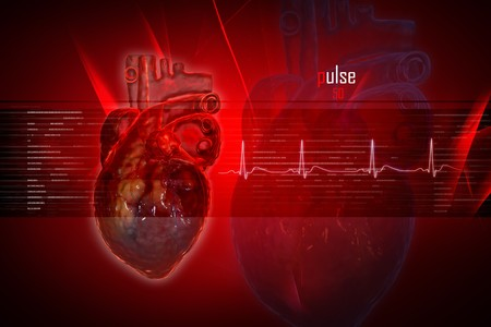 ecg heart: Human heart in digital design