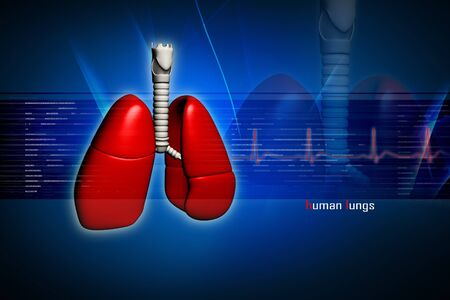 Human lungs in digital design Stock Photo - 8057665