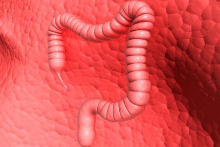 appendix: Human colon   Stock Photo