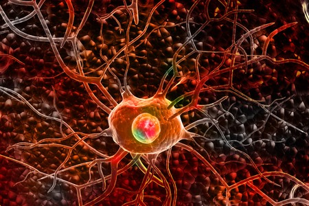 3d Nerve cells  photo