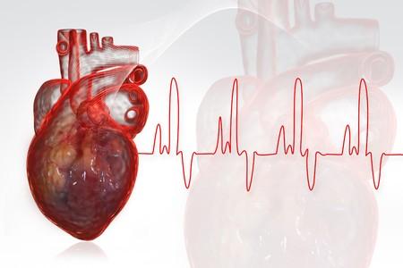 Human heart  with ECG  photo