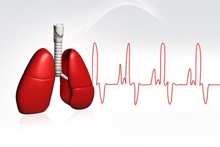 Human lungs with ECG
