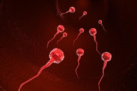 penetration: Sperm cells  Stock Photo