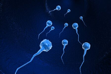 Sperm cells  photo
