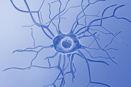 Nerve cells Stock Photo - 8068059