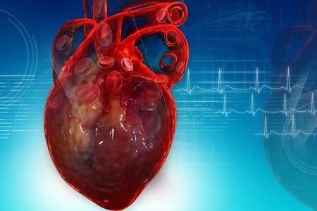 Human heart in digital design