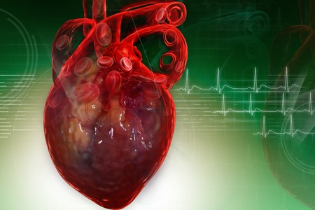 Human heart in digital design Stock Photo - 8068104