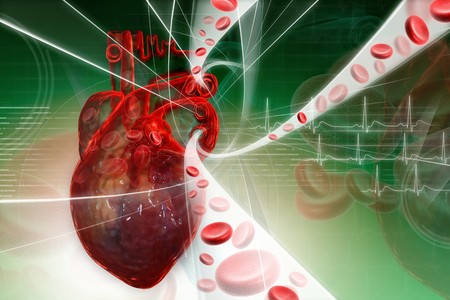 circulation: Heart pumping blood