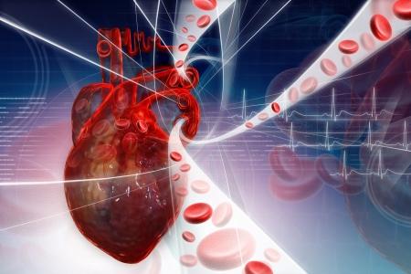 vasos sanguineos: Bombeo de sangre del coraz�n  Foto de archivo