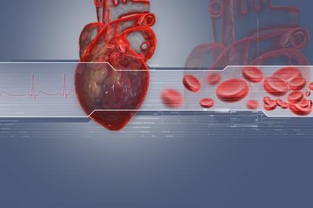 vasos sanguineos: Coraz�n humano