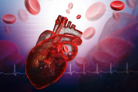 Human heart Stock Photo - 8068098