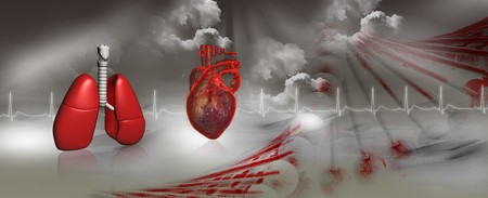 Human heart, dna and lungs  photo