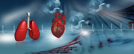 Human heart, dna and lungs  Stock Photo - 8067801