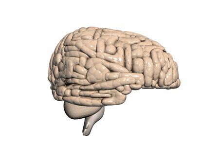 Human brain Stock Photo - 8067908