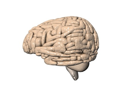 Human brain Stock Photo - 8067926