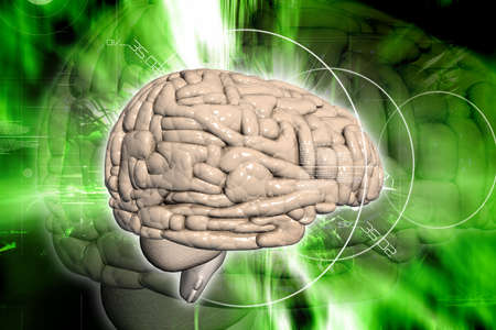 Brain in digital background Stock Photo - 8067867