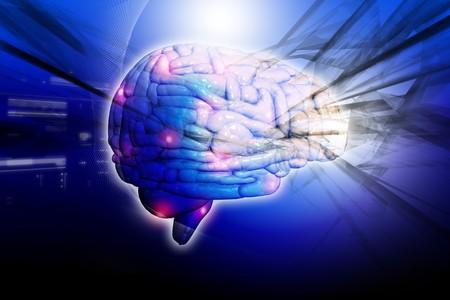 brainy: Human brain  Stock Photo