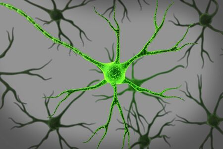 nerve system: Neuron in isolated background   Stock Photo