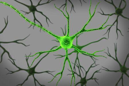 cellule nervose: Neurone sfondo isolato