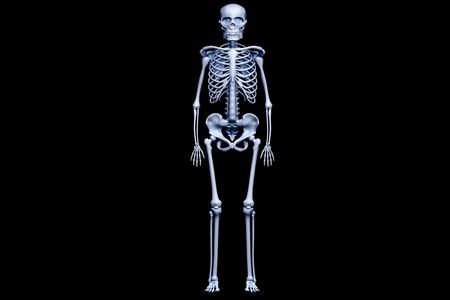 esqueleto humano: procesamiento 3D del esqueleto humano