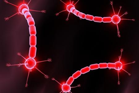 autonomic: Concetto di neuroni e sistema nervoso