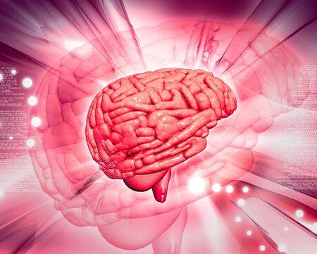 bone anatomy: Brain in abstract background  Stock Photo