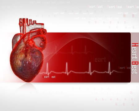 Human heart with ECG Stock Photo - 8947948