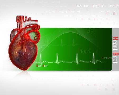 coraz�n y cerebro: Coraz�n humano con ECG