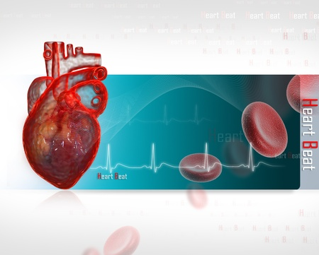 veins: Human heart with ECG
