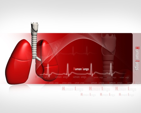 Human lungs with ECG Stock Photo - 8947946