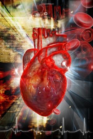 circulatory: Human heart in digital design