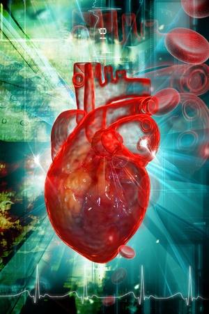 Human heart in digital design  photo