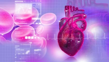 circolazione: Cuore umano con delle cellule del sangue