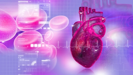 Human heart with blood cell Stock Photo - 8948061