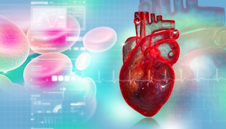 Human heart with blood cell  photo