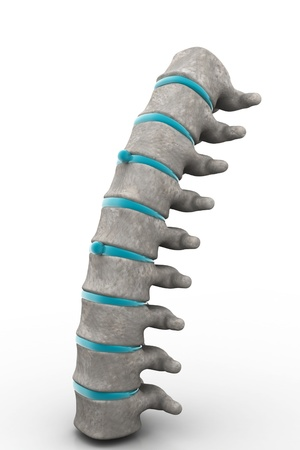 3d part of spine isolated white background photo