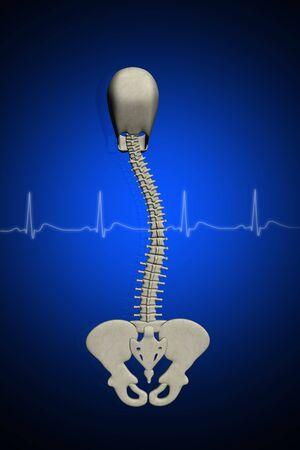 backbone: 3d scoliosis