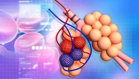 alveoli: Alveoli in abstract design