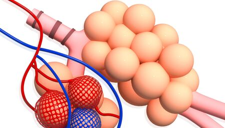 alveolos: alv�olos