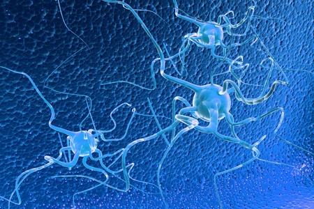 human being: neuron