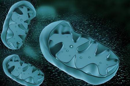 ミトコンドリアの断面図