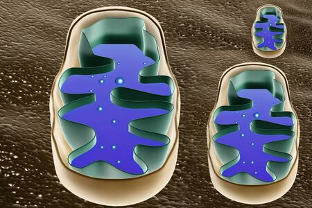 high scale magnification: Mitochondrion cross section
